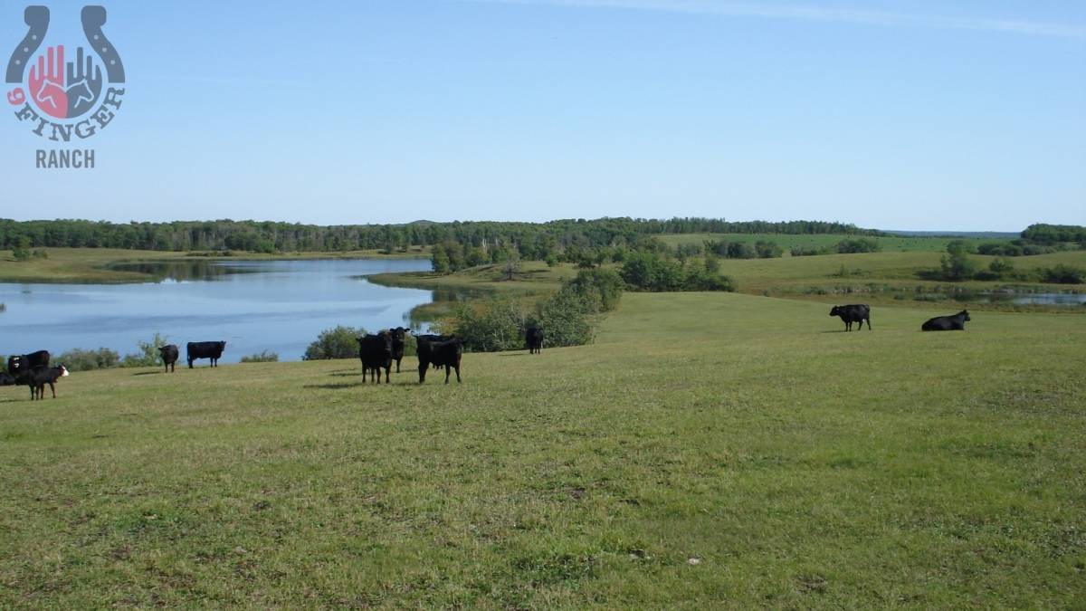 2008-landscape-3-IK