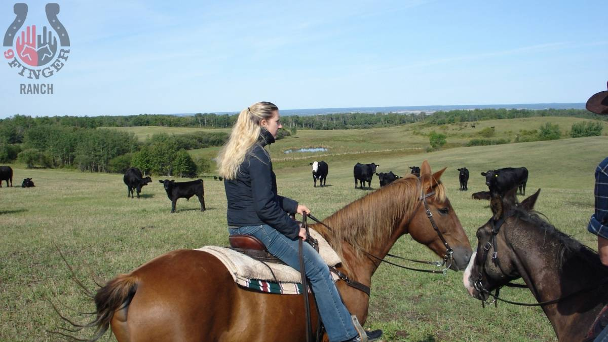 checking-cows