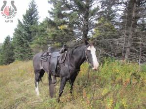 full-day-horse