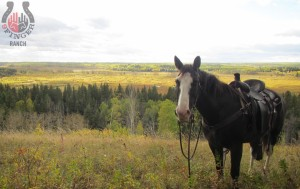 half-day-view-with-horse