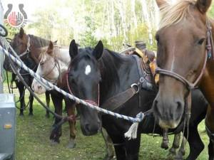 half-day-waiting-horse-trailer