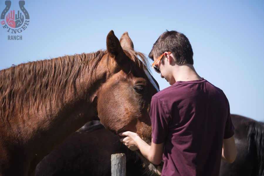 horsecuddles