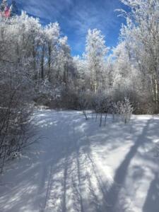 skiing february (1)