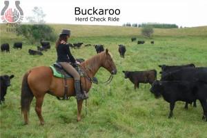 Feat-Buckaroo